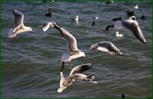 http://img-fotki.yandex.ru/get/15501/15842935.55/0_c6846_d772f541_orig.jpg