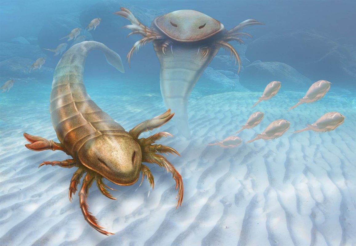 Найдены останки древнего вмире морского скорпиона— ученые