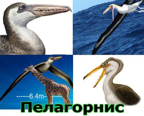 Самые большие животные в мире, существовавшие на земле (фото 7)