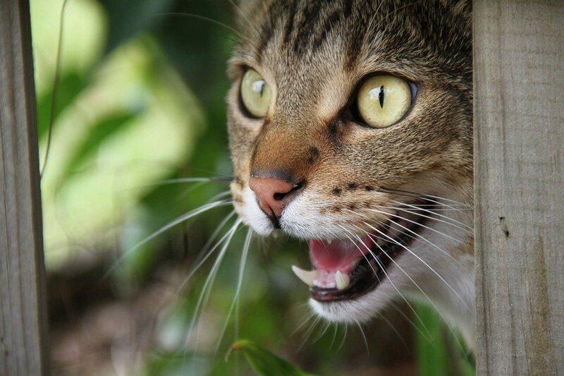 В Новой Зеландии развернули кампанию против домашних кошек