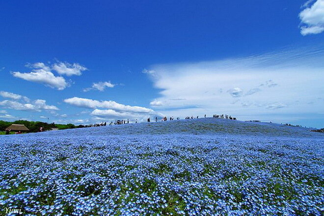 Парк Хитачи Кайхин. Япония