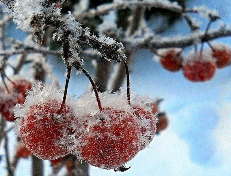 За окошком снегири...
