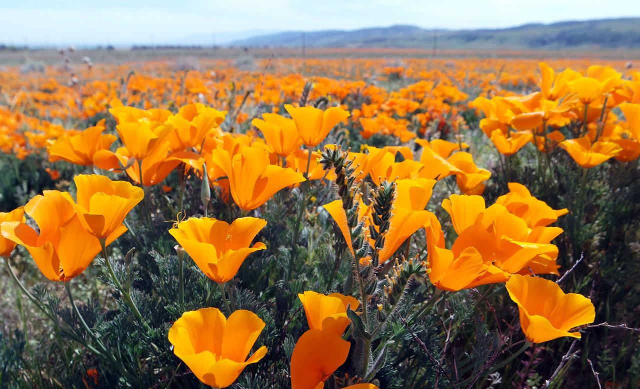 Spring, in focus.5_1280.jpg