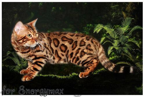 Лаптева-фото - Фотографии животных для питомников и заводчиков - Страница 4 0_143400_84d3f99f_L