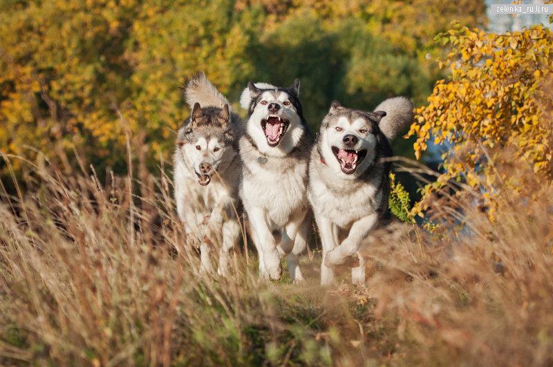 пофотографирую Ваших собак! - Страница 5 0_1663fd_b2ae85fd_XL