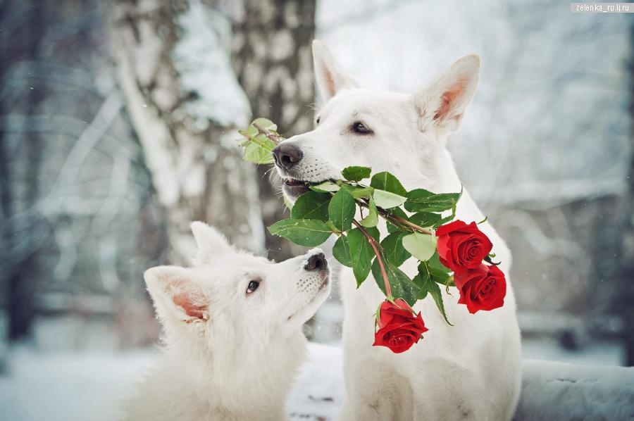 пофотографирую Ваших собак! - Страница 5 0_167950_8cc9121f_orig