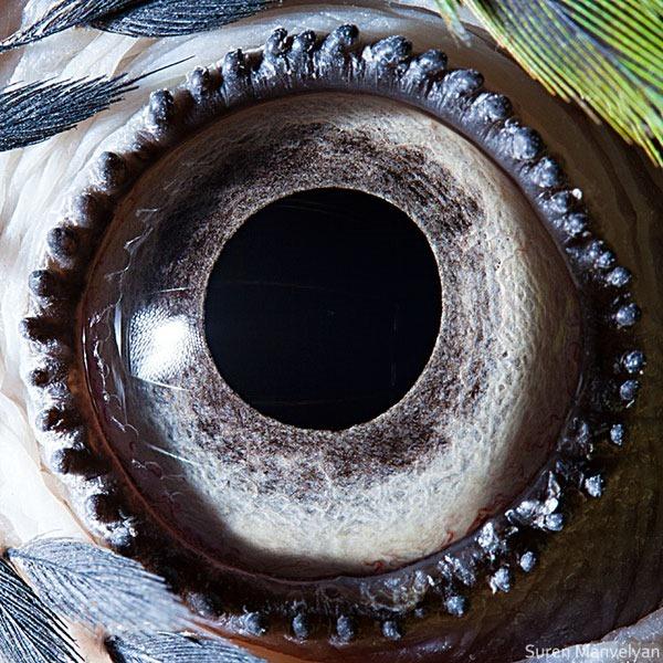 Сурен Манвесян. Фотографии глаз животных крупным 0 122fbc d504f879 orig