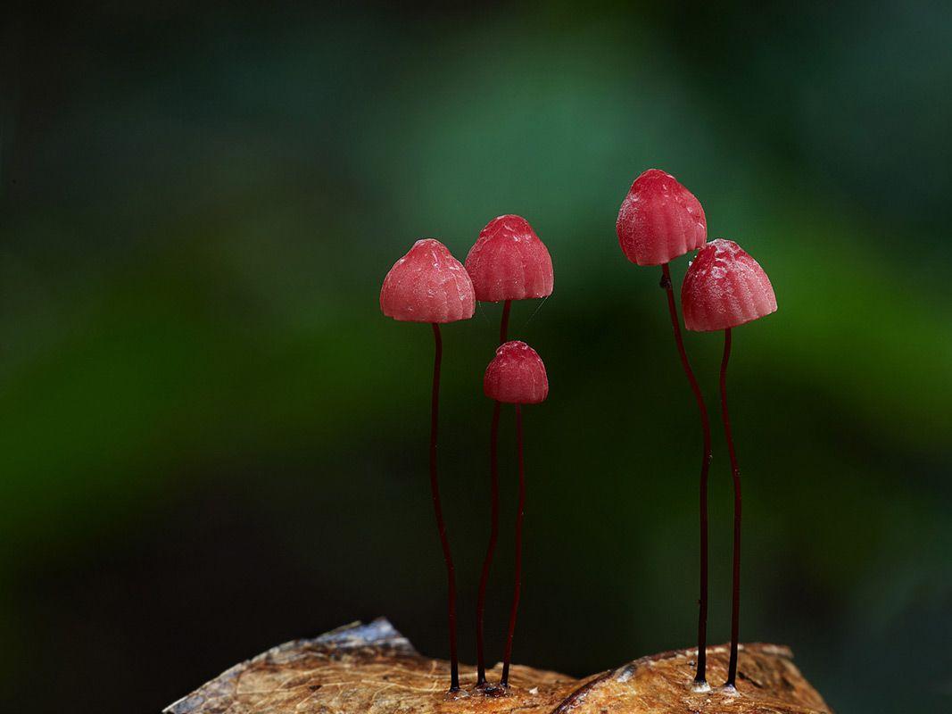 Таинственный мир грибов от Steve Axford