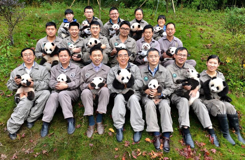 Рекордное количество панд родилось в заповеднике Китая