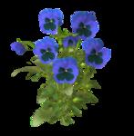 цветы (60).png