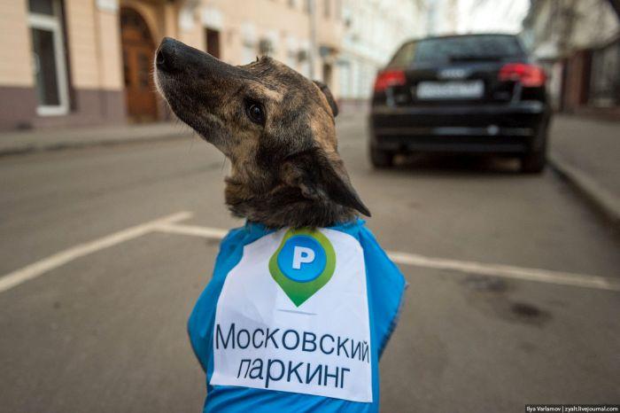 собаки-полицейские