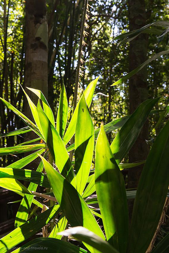 Фото 14. Рассказ о поездке на автомобиле по Таиланду. Отзыв о достопримечательностях провинции Краби. В джунглях парка Khao Pra Bang Khram Wildlife Sanctuary (1250, 52, 9.0, 1/60)