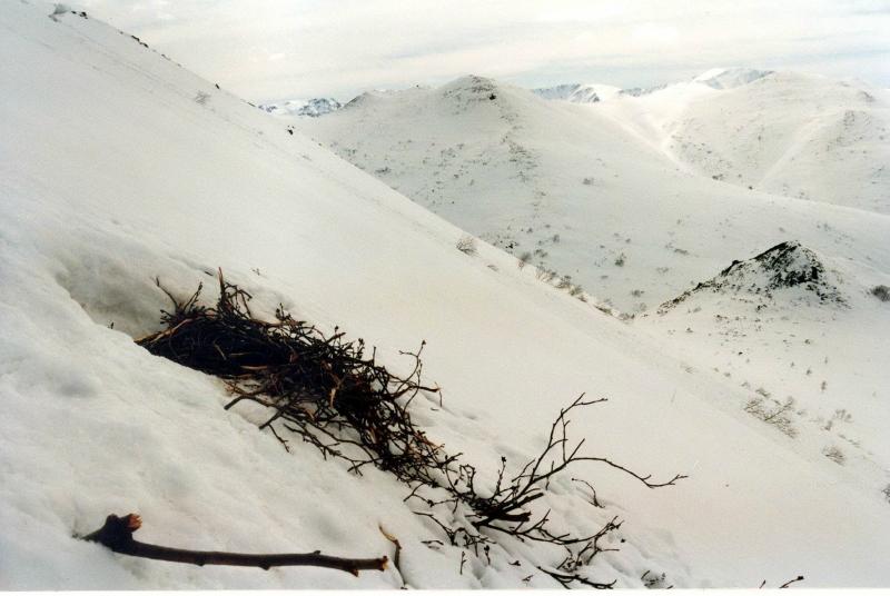 весеннее гнездо2.jpg