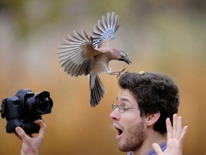 Нужно быть легким, как птица, а не как перышко.  Поль Валери