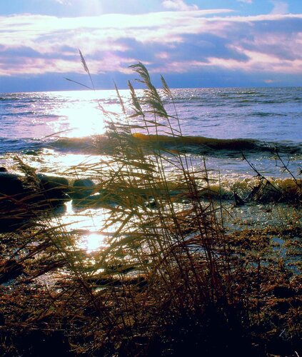 Ноябрьские пейзажи 2010