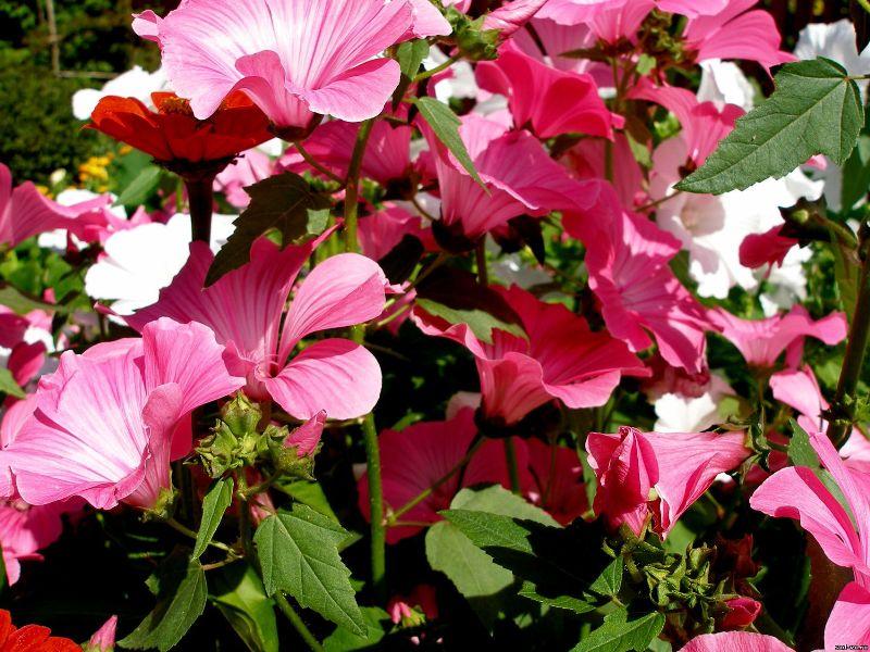 подзимние посевы цветов
