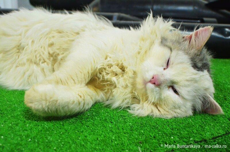 В кота влюбилась, Саратов, музей Боевой славы, 10 декабря 2014 года