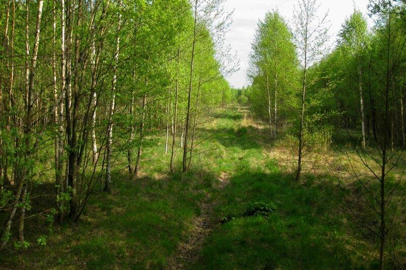 Старая дорога вдоль поля около Долгинихи