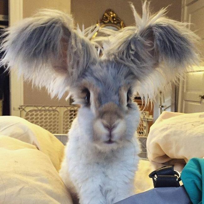 Кролик Уолли и его хозяйка Молли