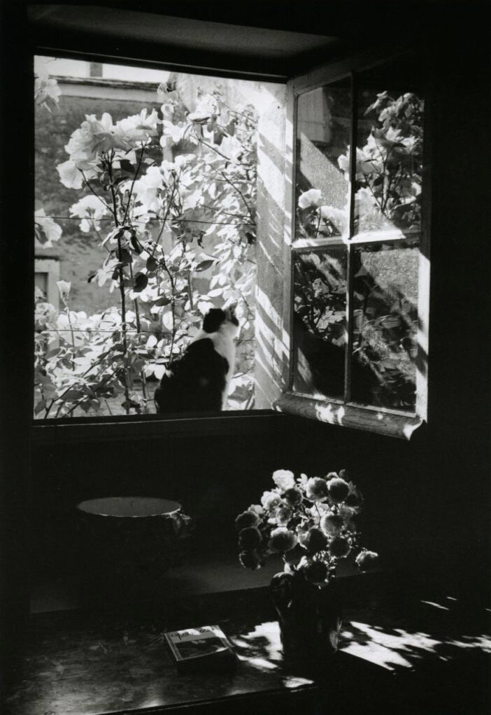 1973. Станислас на окне