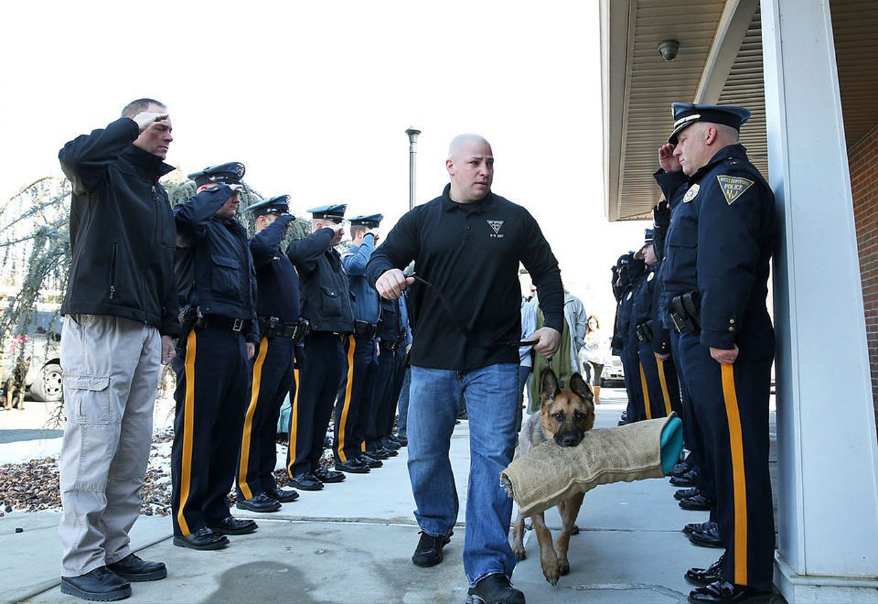 Officers salute retired, terminally ill K9 as he heads to the vet to be euthanized.