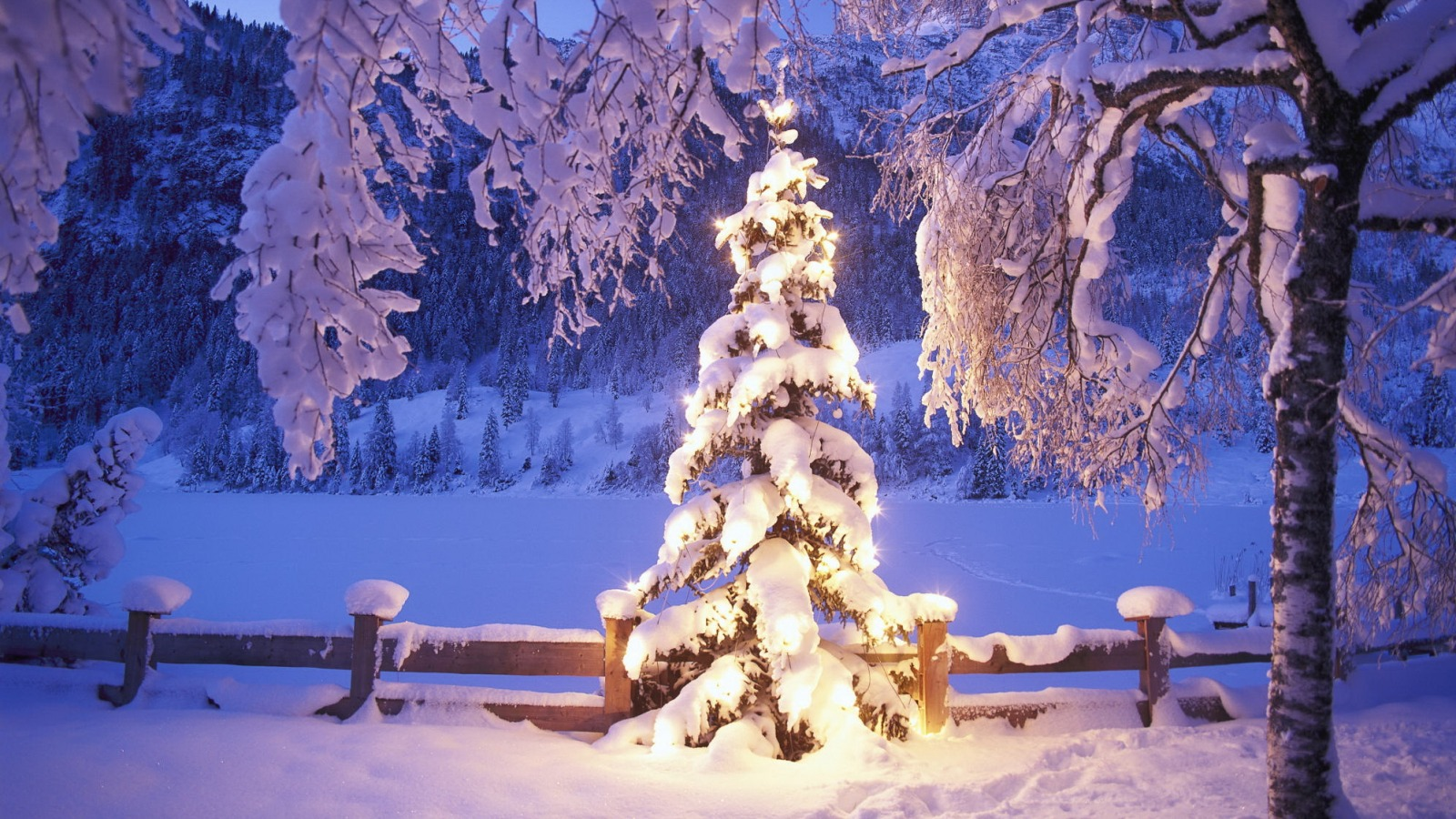 elka-ogni-sneg-zima.jpg