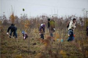 День озеленения в Молдове сегодня, а завтра - день вырубки?