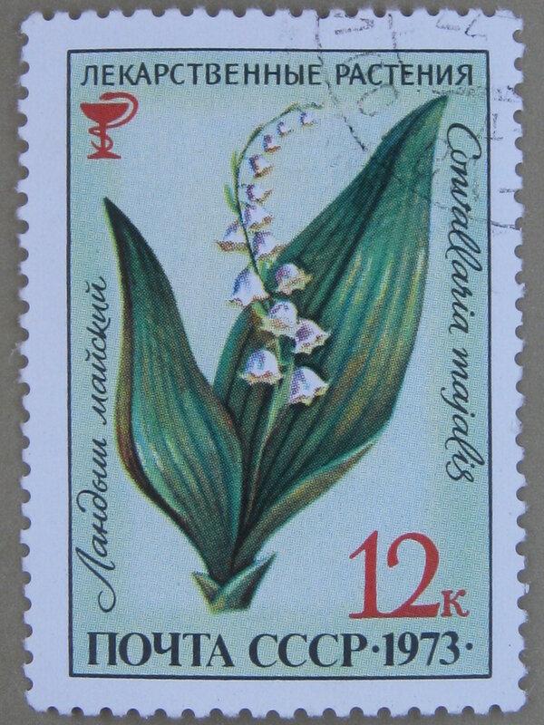 Ландыш майский (Convallaria majalis).