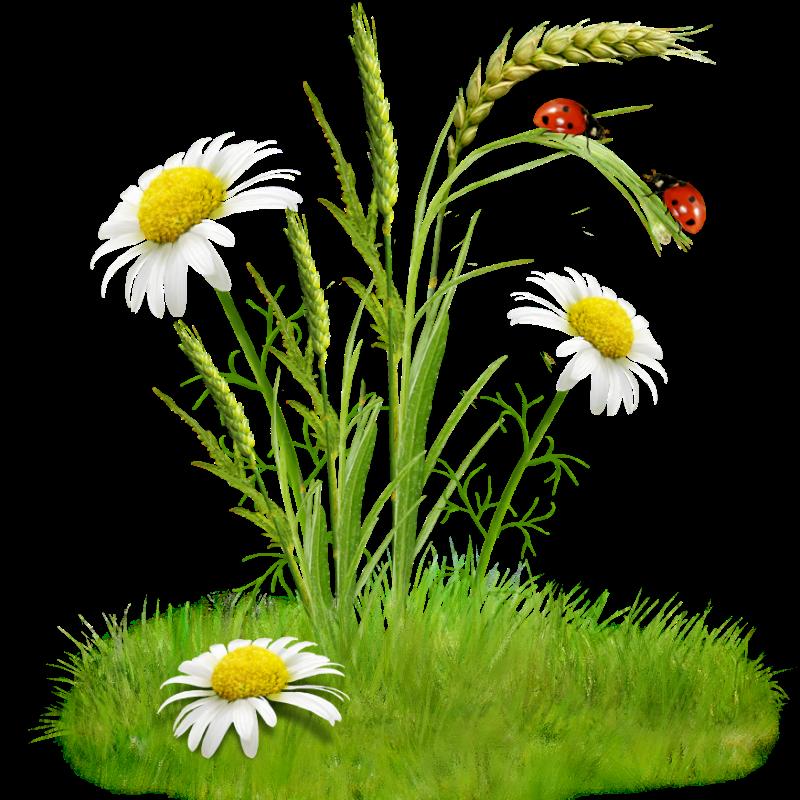 la fillette -fleurs rouges et fleurs des champs