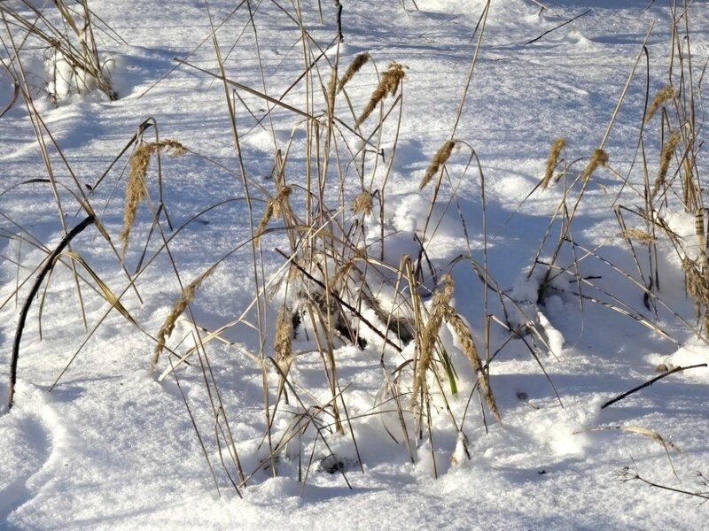 Морозец, ой, нешуточный... DSC06791.JPG