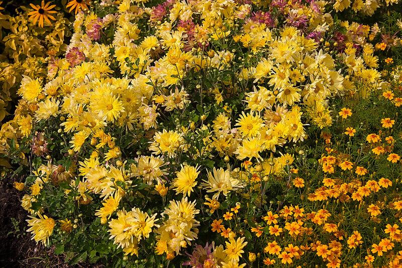 Цветы с золотого сада