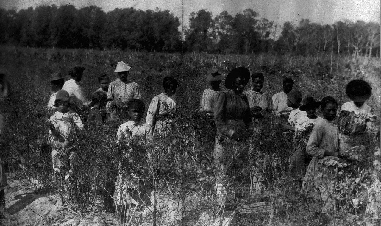 1884. Сбор перца для приготовления табаско