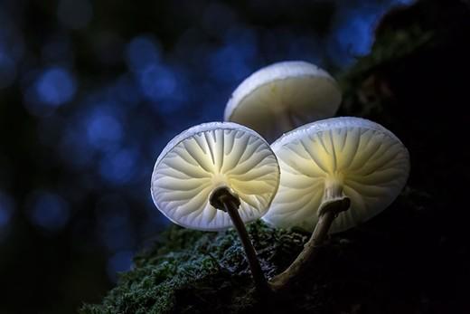 Fungi0.jpg
