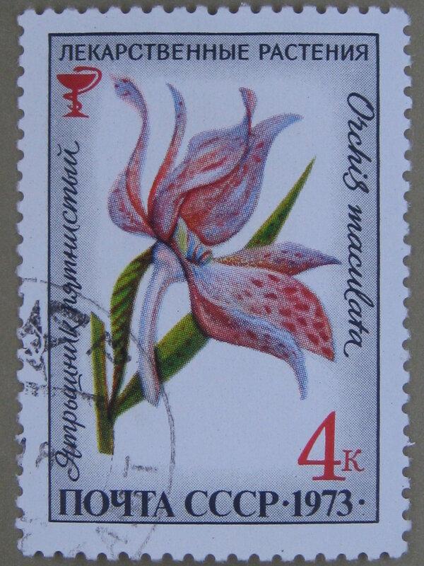 Ятрышник пятнистый (Orchis maculata).