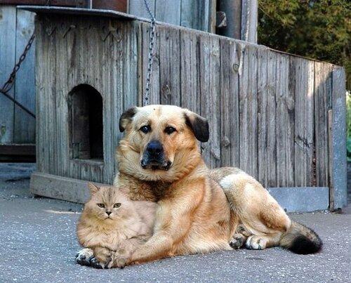 Сама по себе гулёна (о кошках) 0_10385d_79178c9e_L