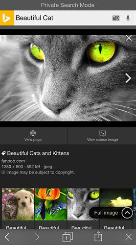 Bing-privacy-search-mode-BeautifulCat2.jpg