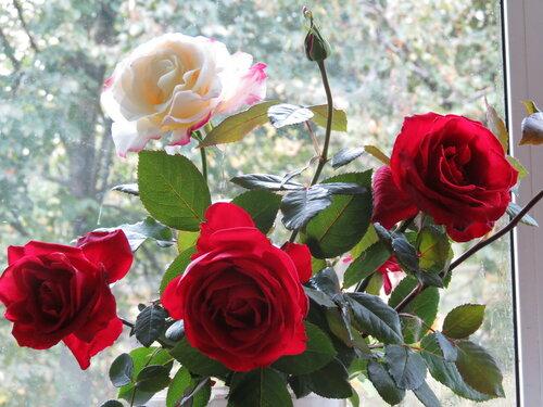 Последние розы уходящего года