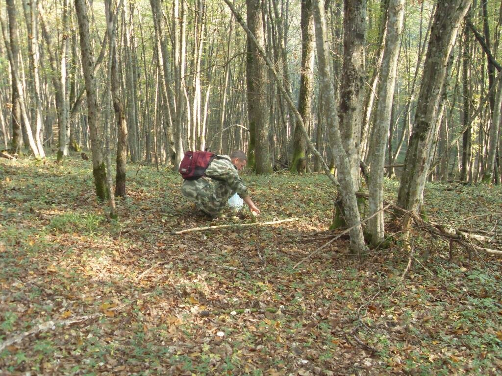12 октября 2008, под Горячим Ключом, в лесу (106).JPG