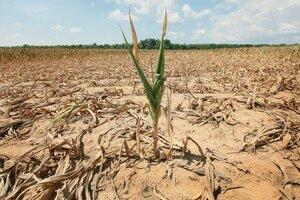 В Молдове объявлен желтый код – надвигается засуха