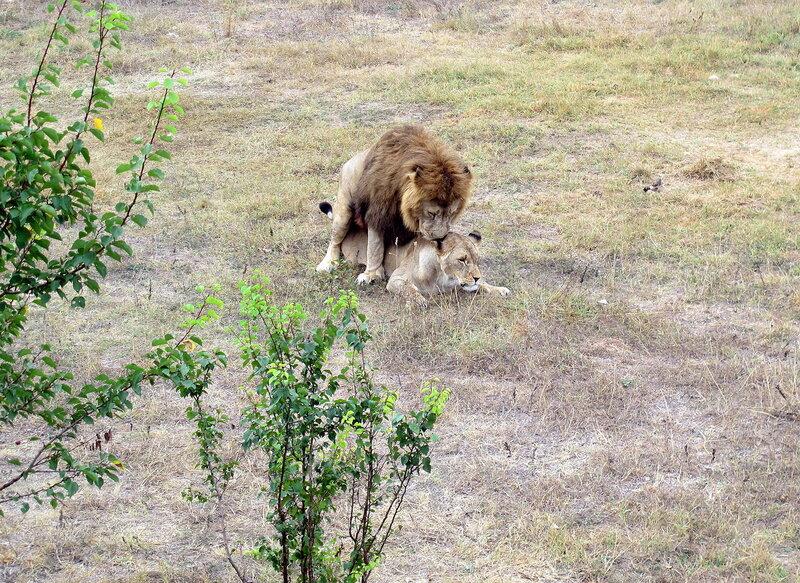 Сафари-парк Сайган