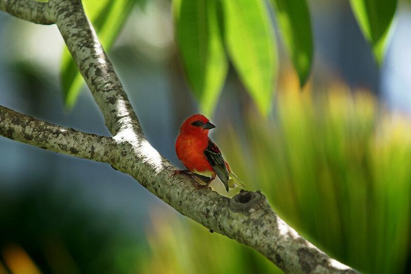 Маврикий 2015 птица-1.jpg