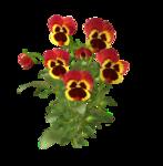 цветы (56).png