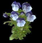 цветы (57).png