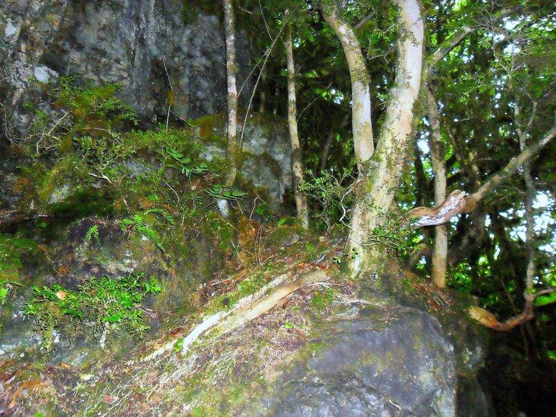 В лесу ... SAM_0590.JPG