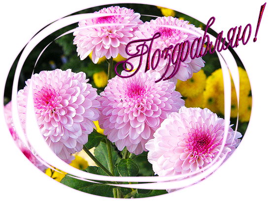розовый_поздравляю.png