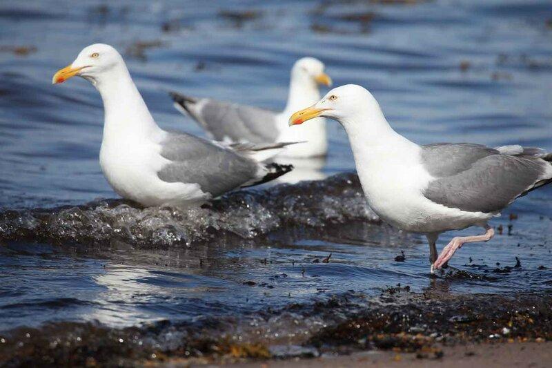остров Сидоров, птицы