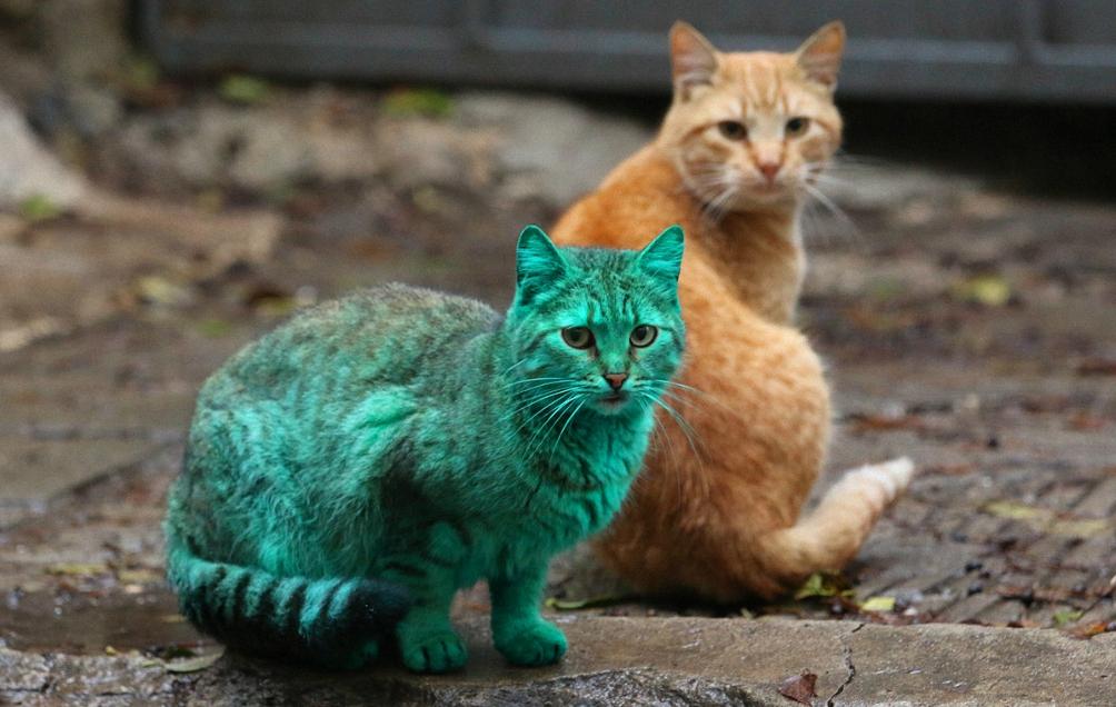 удивительные фотографии кошек описание