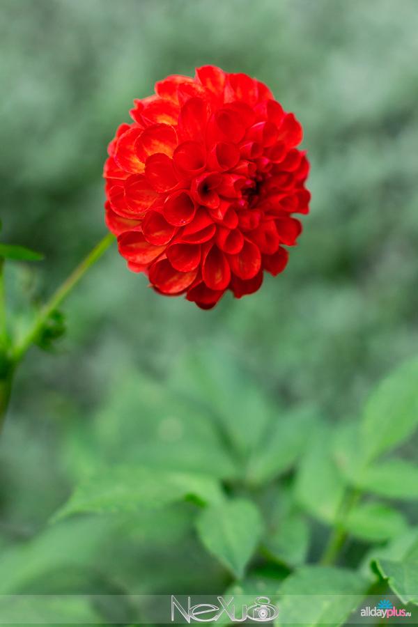 Я люблю все цветы, выпуск 138 | Разные цветы.
