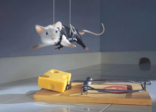 Человек изобрел атомную бомбу. Еще ни одна мышь не додумалась изобрести мышеловку. Вернер Мич