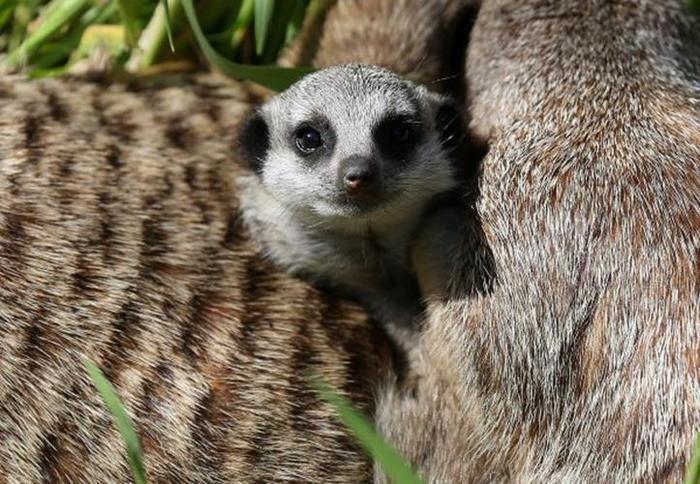 Маленькие детеныши животных в зоопарке   очень интересные фотографии